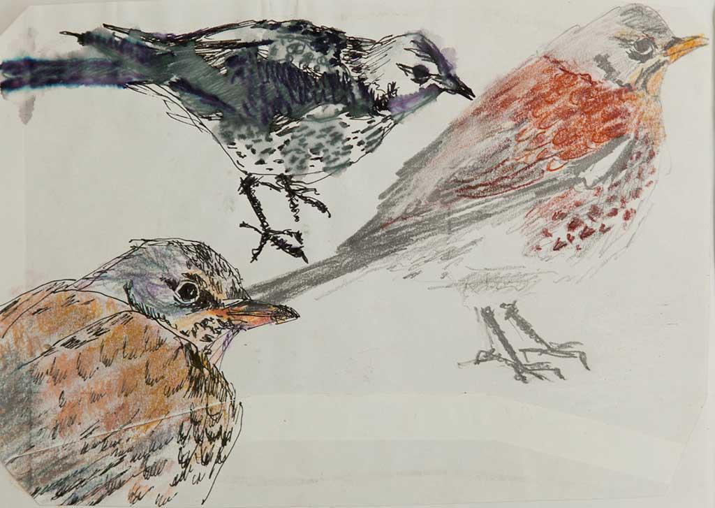 vogels 5